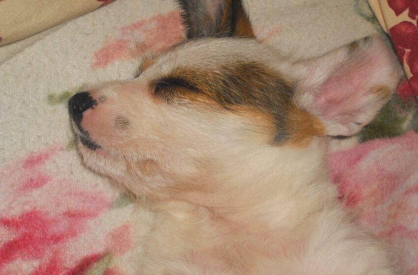 Il mimetismo dei cani