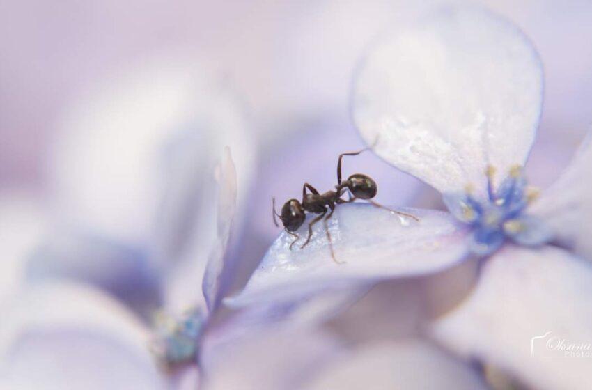 Le formiche lavoratrici