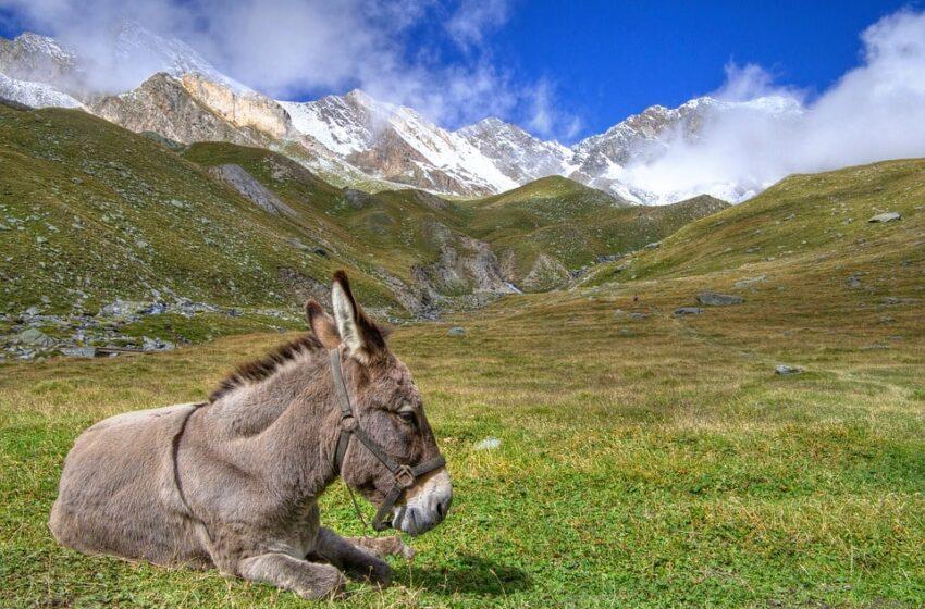 Valle d'Aosta, una valle tutta da scoprire