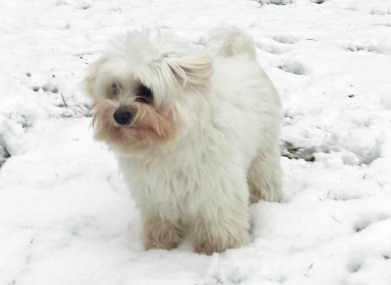 Martino e la neve