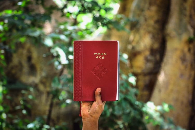 """Book forest: un nuovo modo di """"leggere la natura""""."""