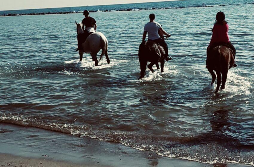 Cavalli e mare