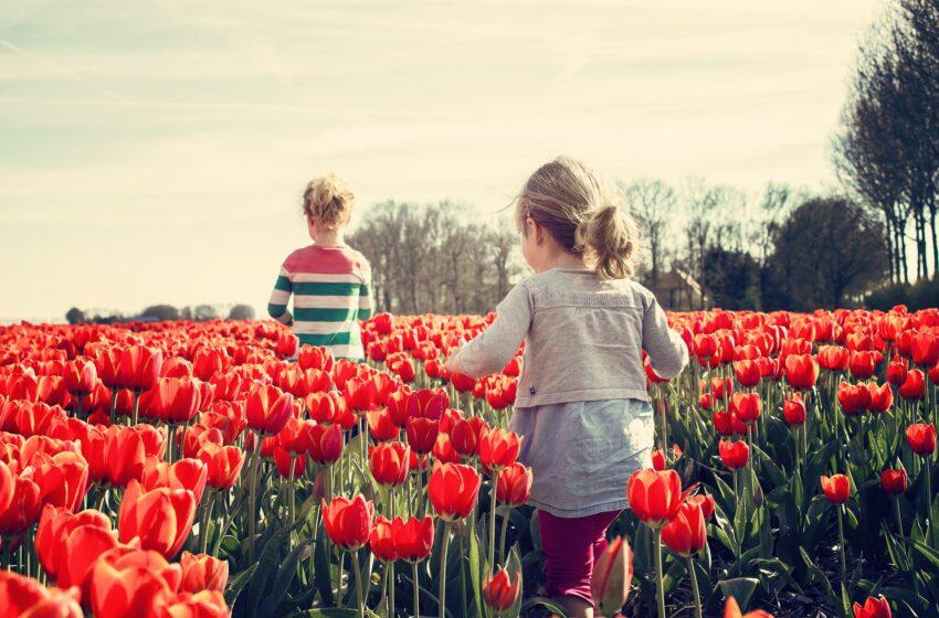 In un campo di fiori