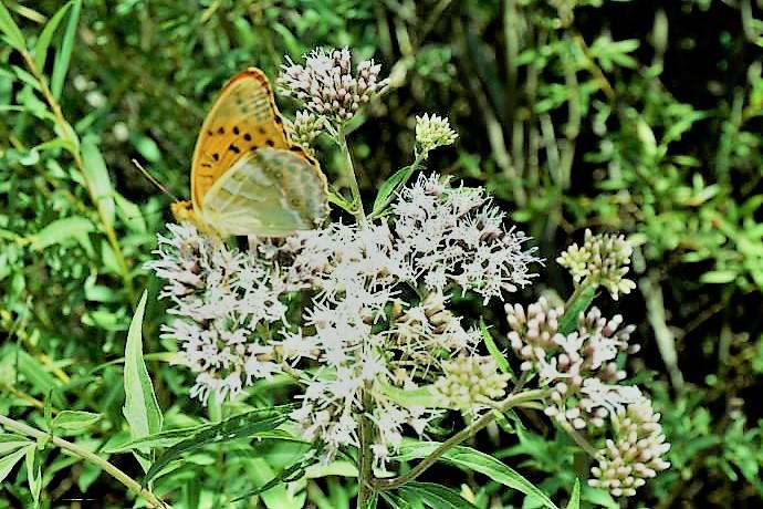 L' aria intorno a una farfalla
