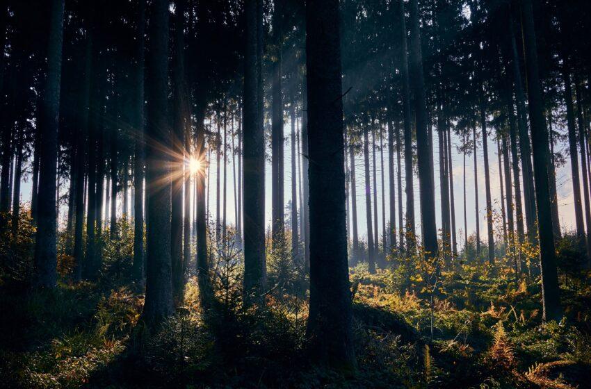 Una luce tra gli alberi
